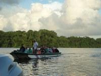 Tortuguero - National Park - Turtles
