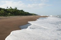 Turtle Nesting Grounds in Costa Rica